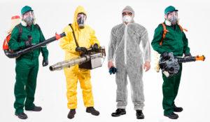 Уничтожение домашних насекомых с гарантией