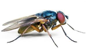 Пест-контоль летающих в помещении насекомых