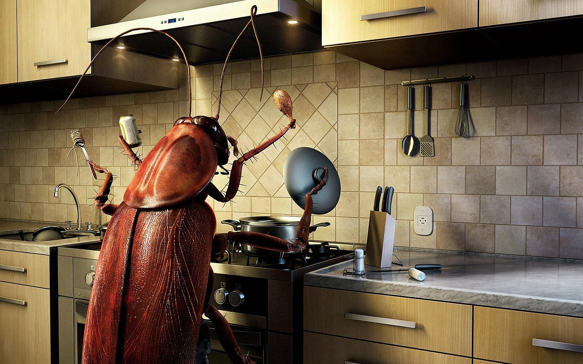 Смешные картинки с тараканами