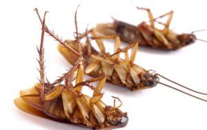 Гарантированное уничтожение тараканов Сочи