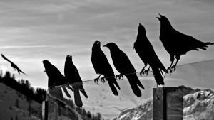 Пест-контроль птиц