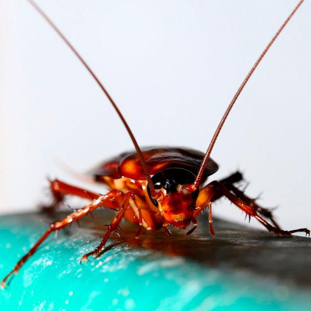 Потравить тараканов в Сочи