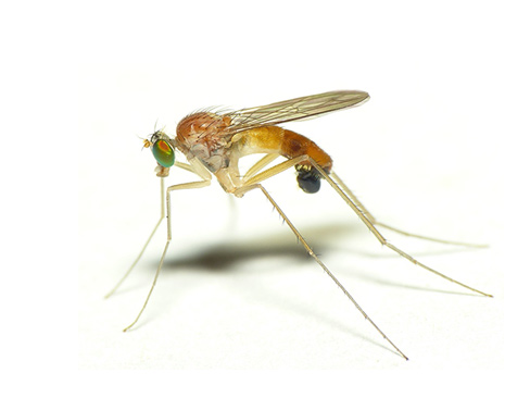 Уничтожение комаров в Сочи