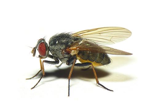 Уничтожение мух в Сочи